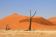 Abgestorben (Namibia)